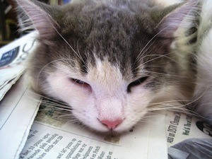 More sleep, better memory - photo of cat napping