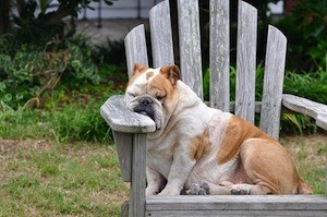 Are you mentally prepared for better grades in your exams - photo of sleeping dog