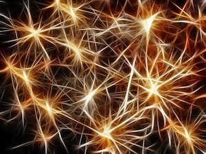 RO2 and your changing brain - image of neurons