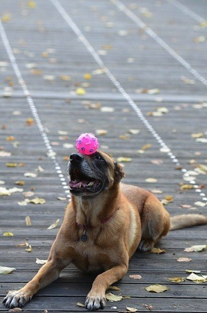 Are you too old to learn? photo of dog tricks