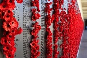 Brain circuitry & PTSD - photo of poppies on war memorial