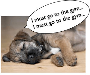 I must go to the gym - photo of sleeping puppy