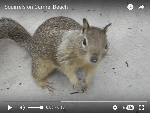you addicted to multitasking? Video of squirrels