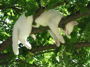 Are you sitting comfortably? Photo of cat asleep in tree