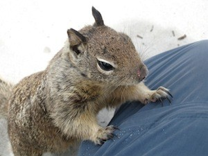 Are you addicted to multitasking - photo of squirrel on Carmel beach