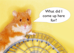 What am I doing up here? Photo of hamster on top of its wheel