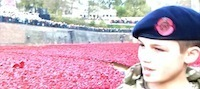 Lest we forget - why I'll remember the poppies. Photo of Harry Hayes