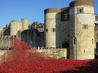 Lest we forget - why I'll remember the poppies - Photo of the poppies at the Tower of London