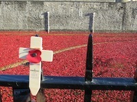 Lest we forget - why I'll remember the poppies. Photo of poppies at the Tower of London