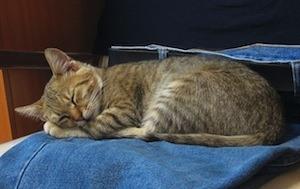 Sleep learning - Photo of cat sleeping