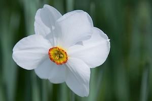 Narcissism or high self-esteem - photo of daffodil