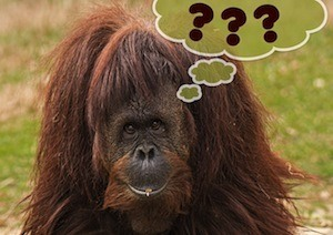Two easy things to improve your revision - photo of orang utan