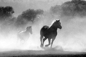 Here are the 4 Horsemen on the Apocalypse: - Photo of wild horses stampeding