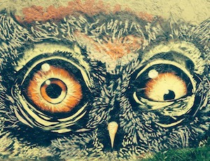 Spaced out? Picture of strange-looking owl