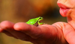 How to be happy - photo of small frog on a human hand