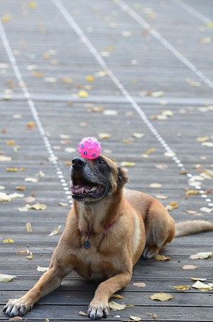 How to be happy - photo of dog balancing a ball on its nose