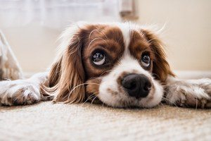 Are you doing anxiety and depression - depressed dog